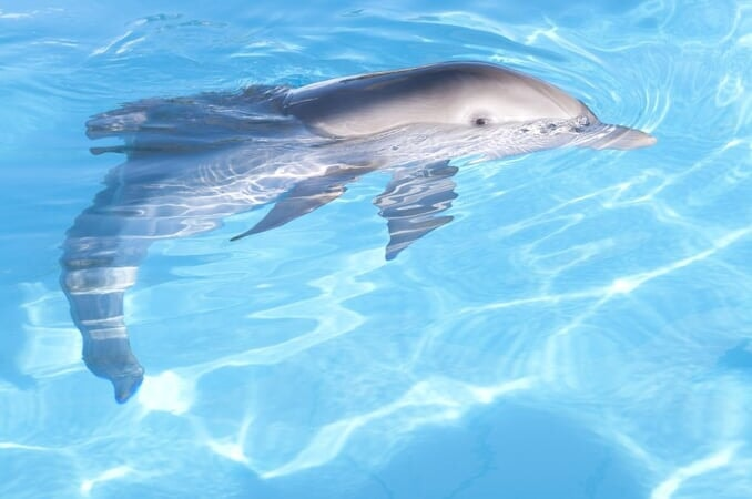 Dolphin Tale / Incroyable Histoire de Winter - Image - Afbeelding 15