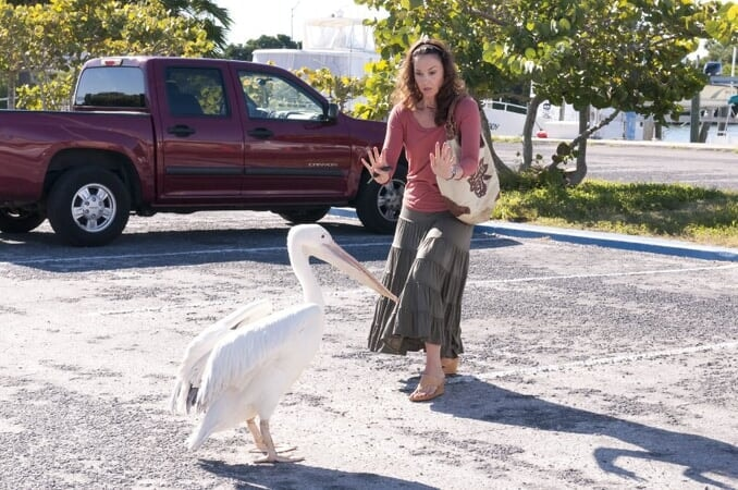 Dolphin Tale - Image - Image 19