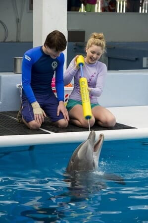Dolphin Tale 2 - Image - Afbeelding 6