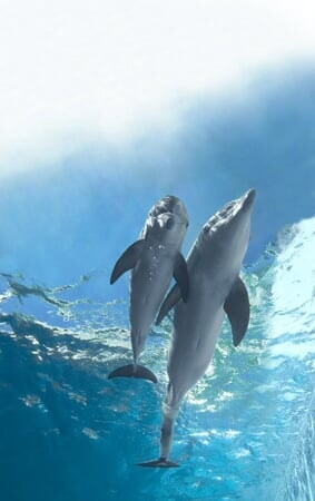 Dolphin Tale 2 - Image - Afbeelding 34