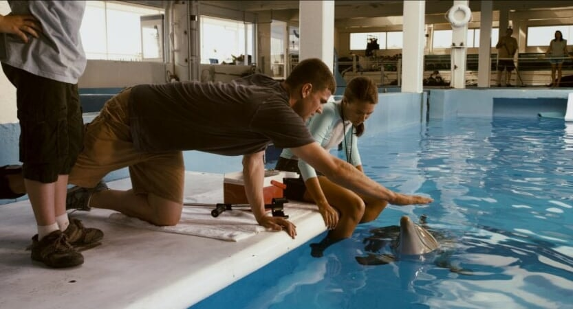 Dolphin Tale - Image - Image 24
