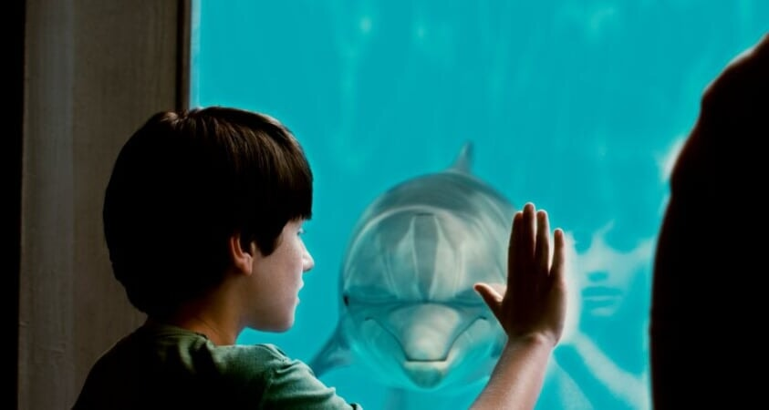 Dolphin Tale / Incroyable Histoire de Winter - Image - Afbeelding 25