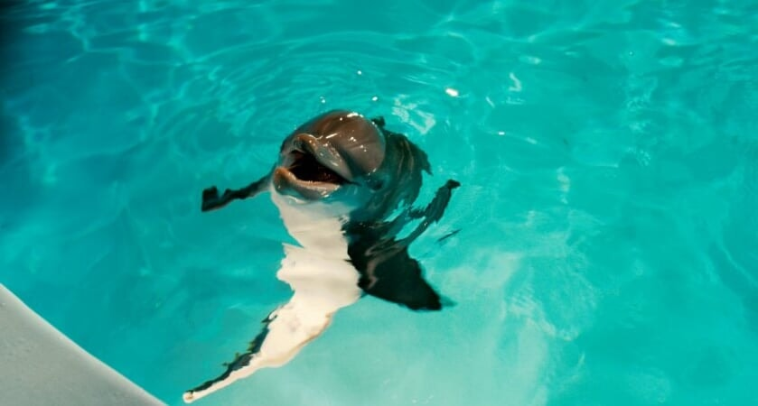 Dolphin Tale / Incroyable Histoire de Winter - Image - Afbeelding 22