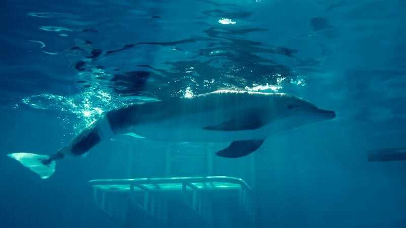Dolphin Tale / Incroyable Histoire de Winter - Image - Afbeelding 7